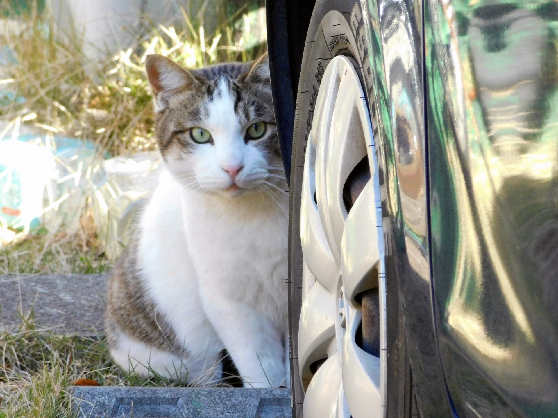野良猫侵入の被害