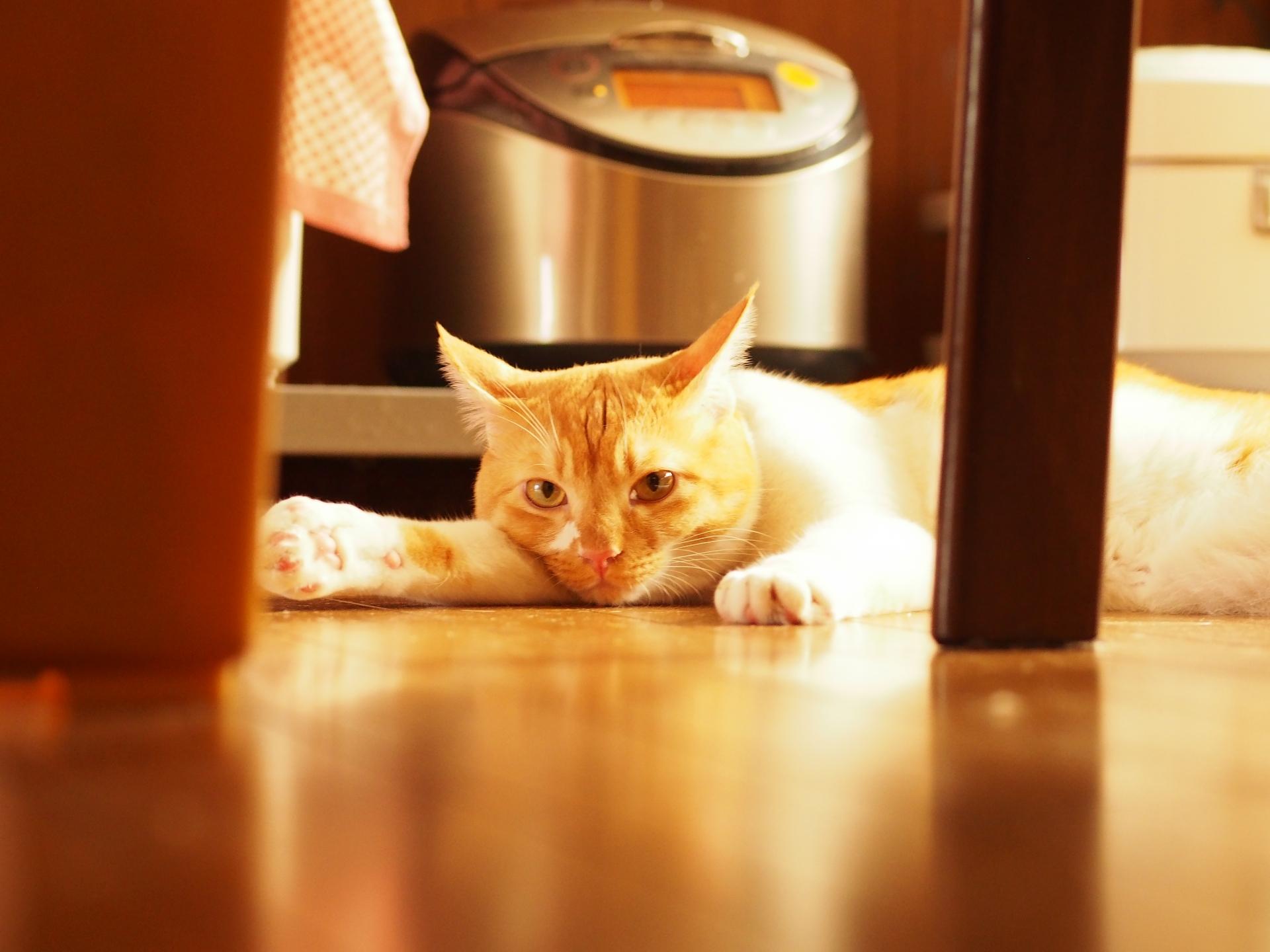 気をつけたい猫の家庭内事故5:感電