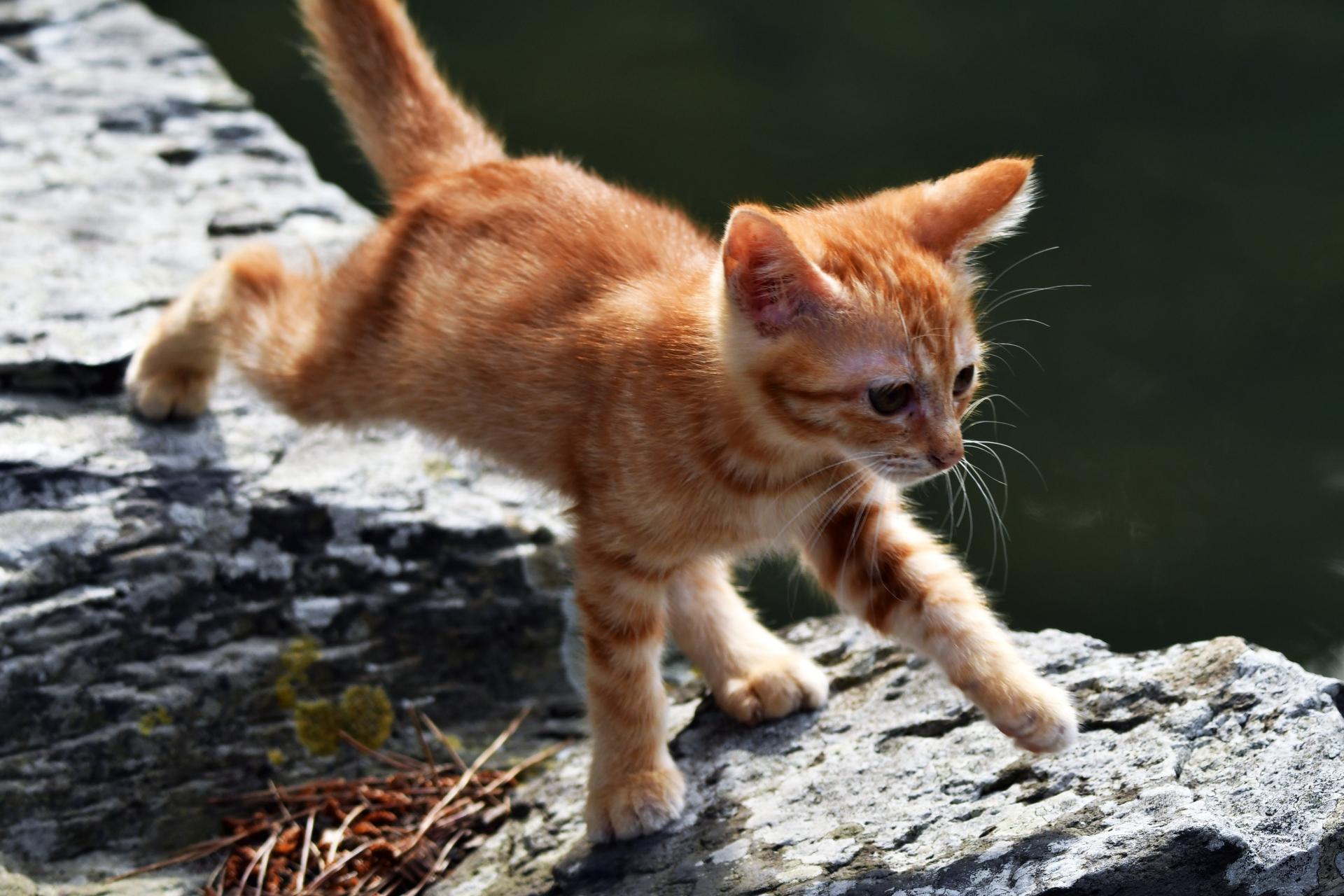 気をつけたい猫の家庭内事故8:脱走