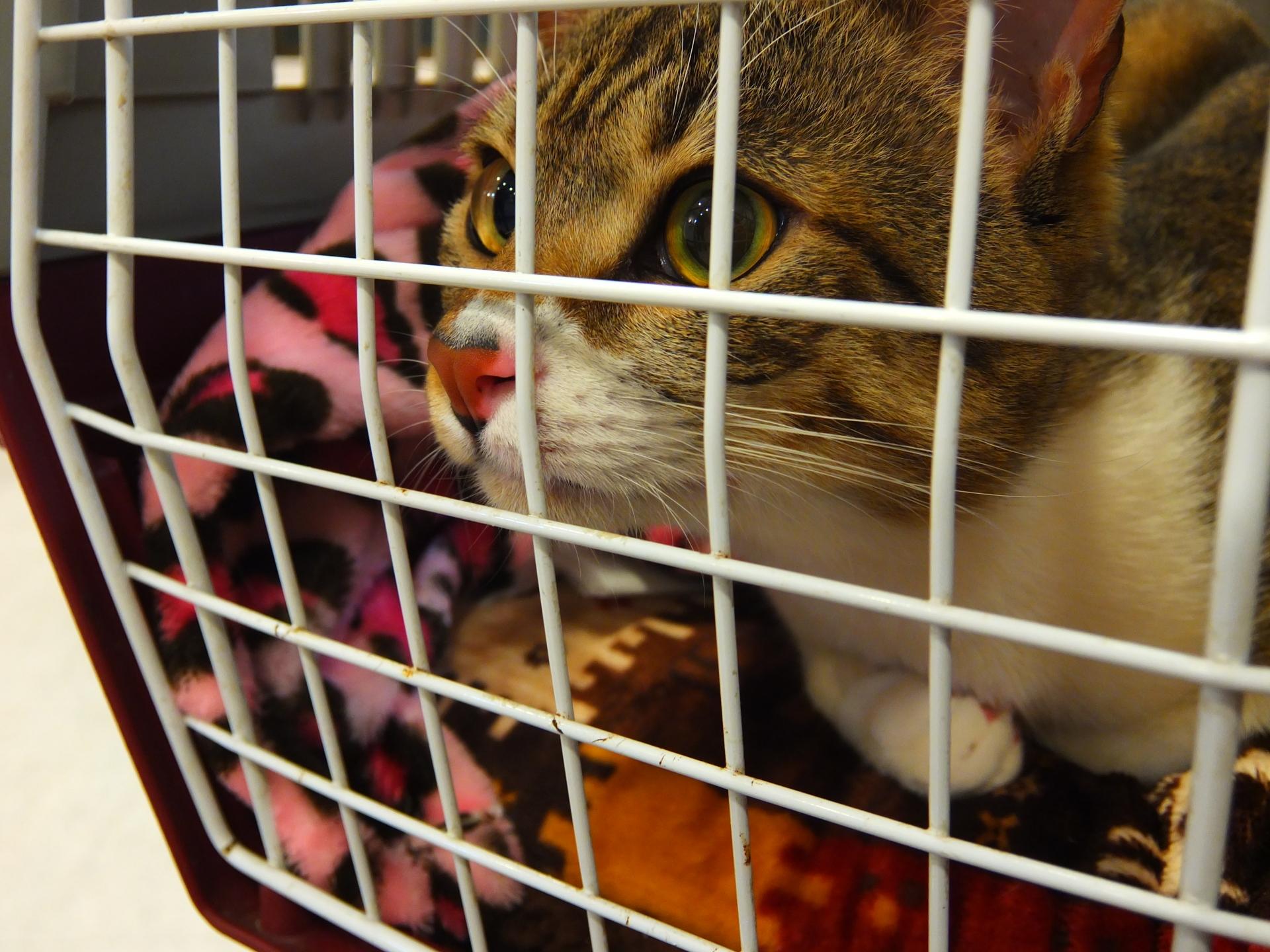 猫の防災グッズへの関心が高まっている