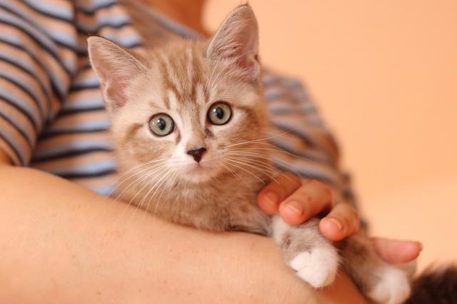 【期待】2020年6月の動物愛護法改正でなにが変わるのか?