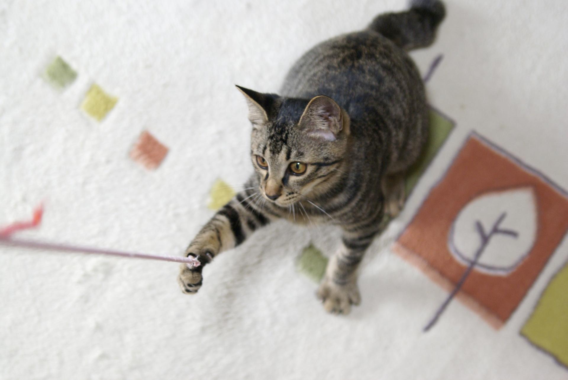 飼い主の在宅ワークで猫もストレスが溜まる