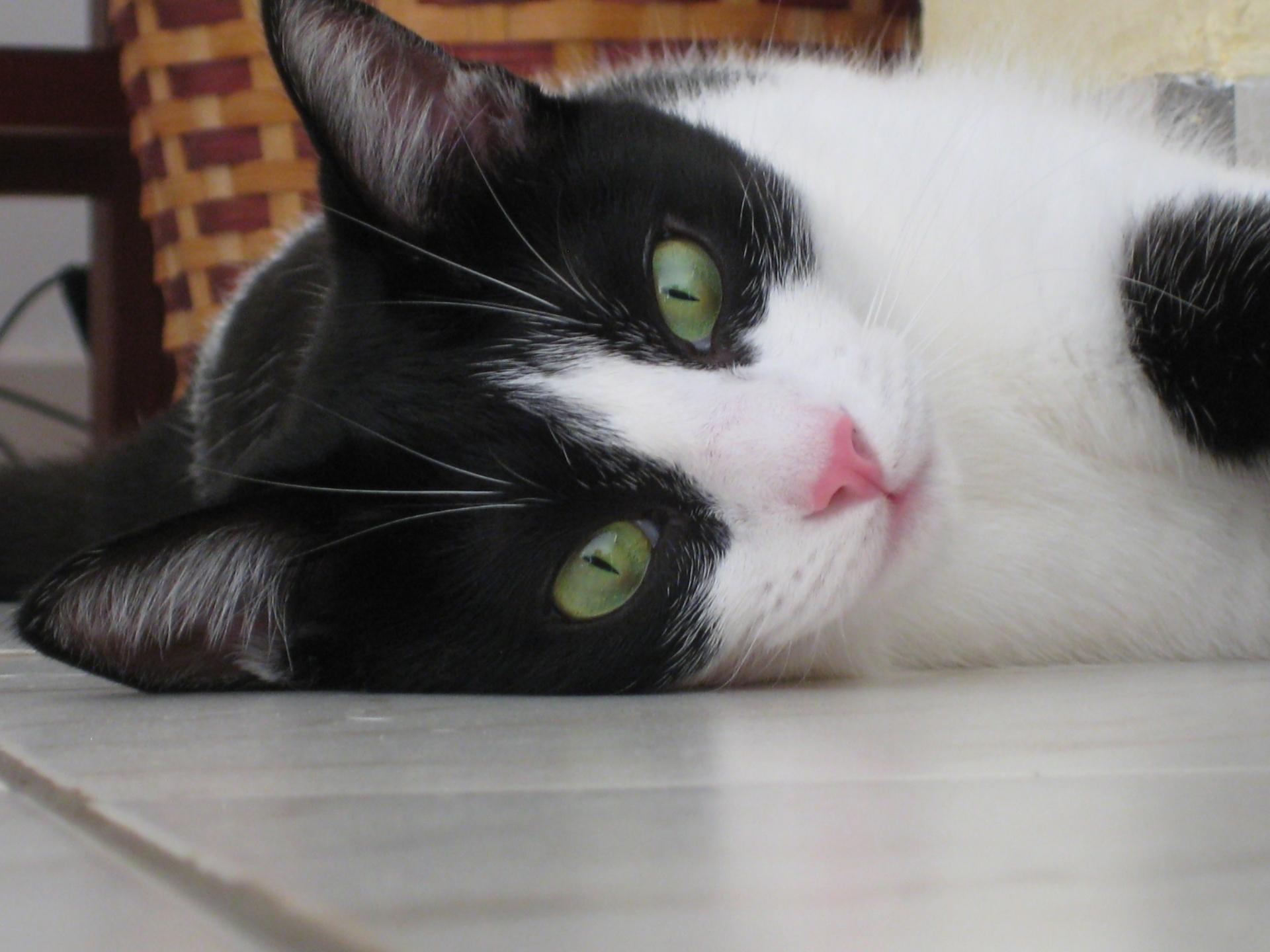 休業が続けば保護猫の命が危ない