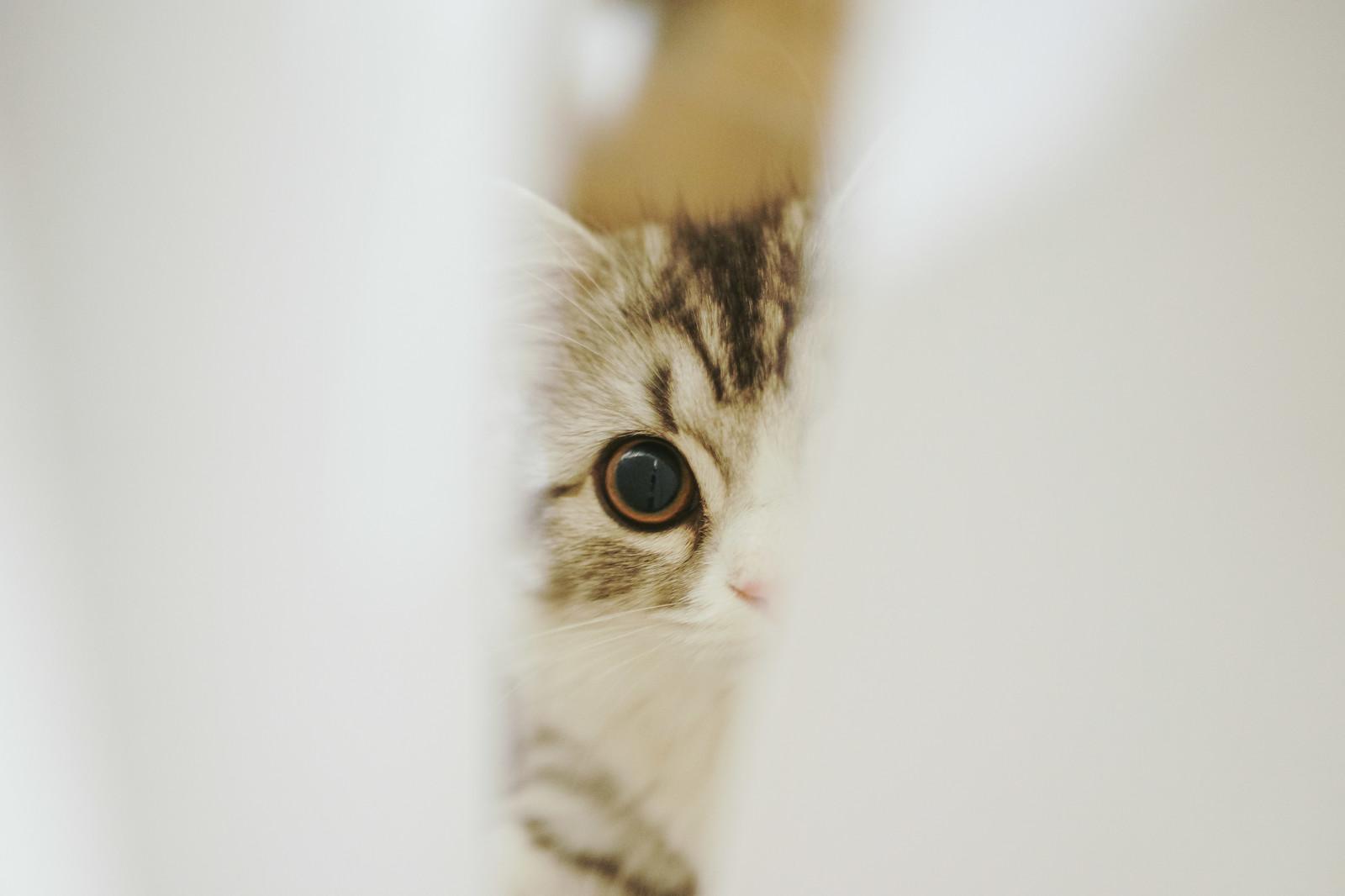 気をつけたい猫の家庭内事故6:せまい場所に挟まる