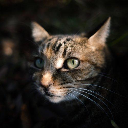 猫の動物虐待を見つけたときの通報方法【虐待のケース別に解説】