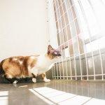 マンションで暮らす猫の日光浴方法