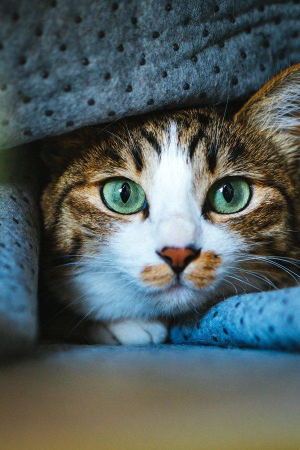猫の家庭内に潜む8つの危険【家庭内事故リスクから猫を守る】