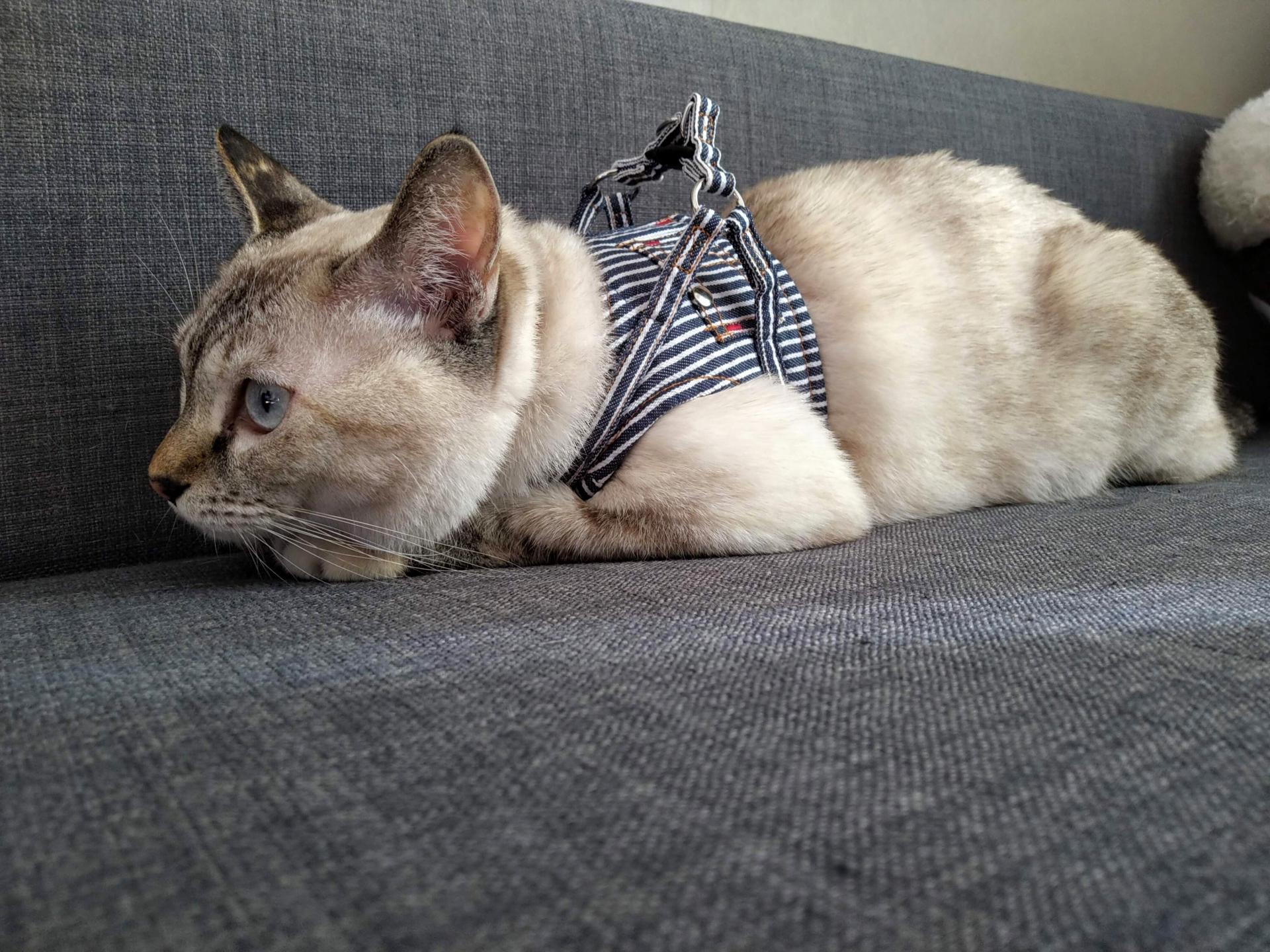 猫といっしょの避難生活を想定してみる