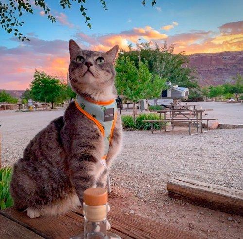 猫の防災グッズへの支出が増加している理由とは【避難時の脱走に備える】