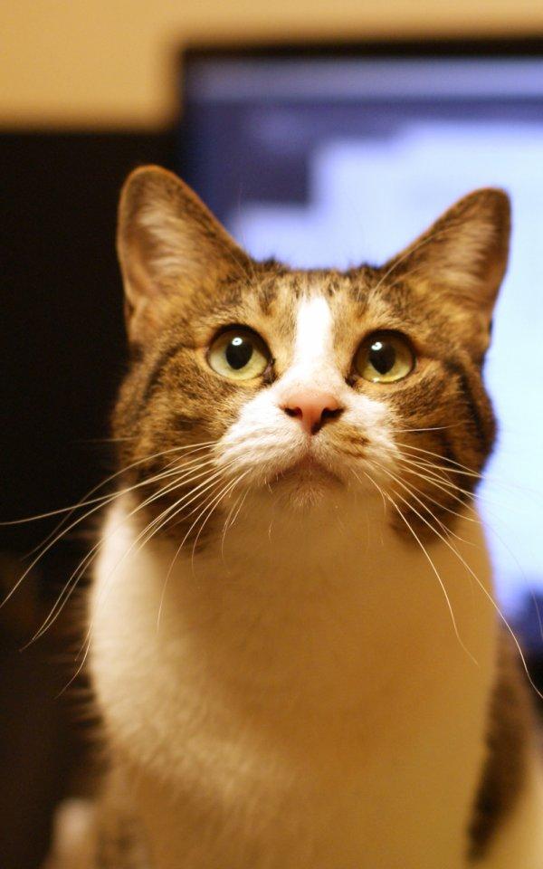外出自粛で猫の飼い主が在宅ワークするときに気をつけることとは【猫の寝不足に注意】