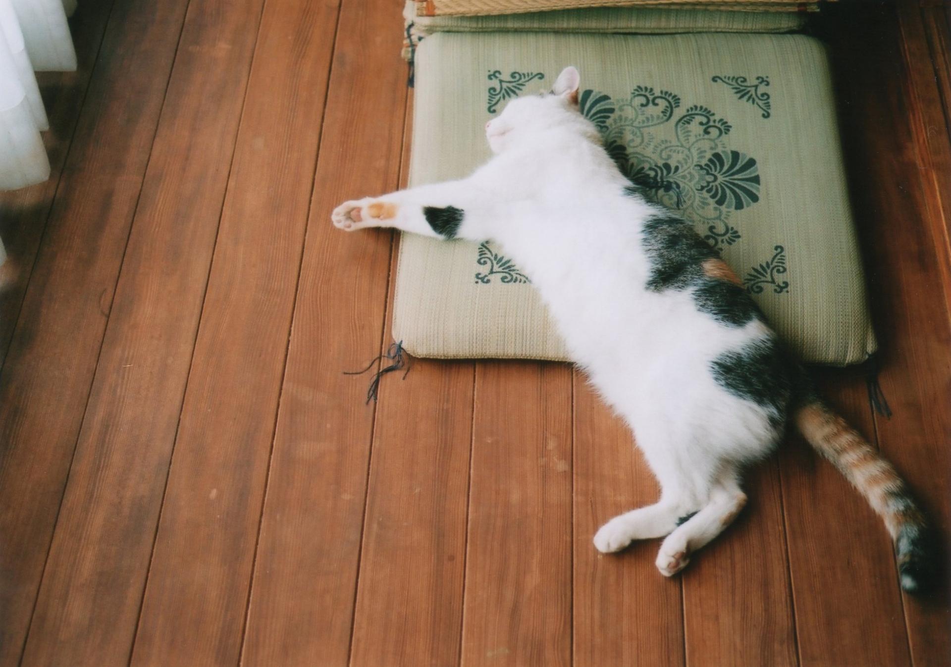 猫は1日のほとんどを寝て過ごす