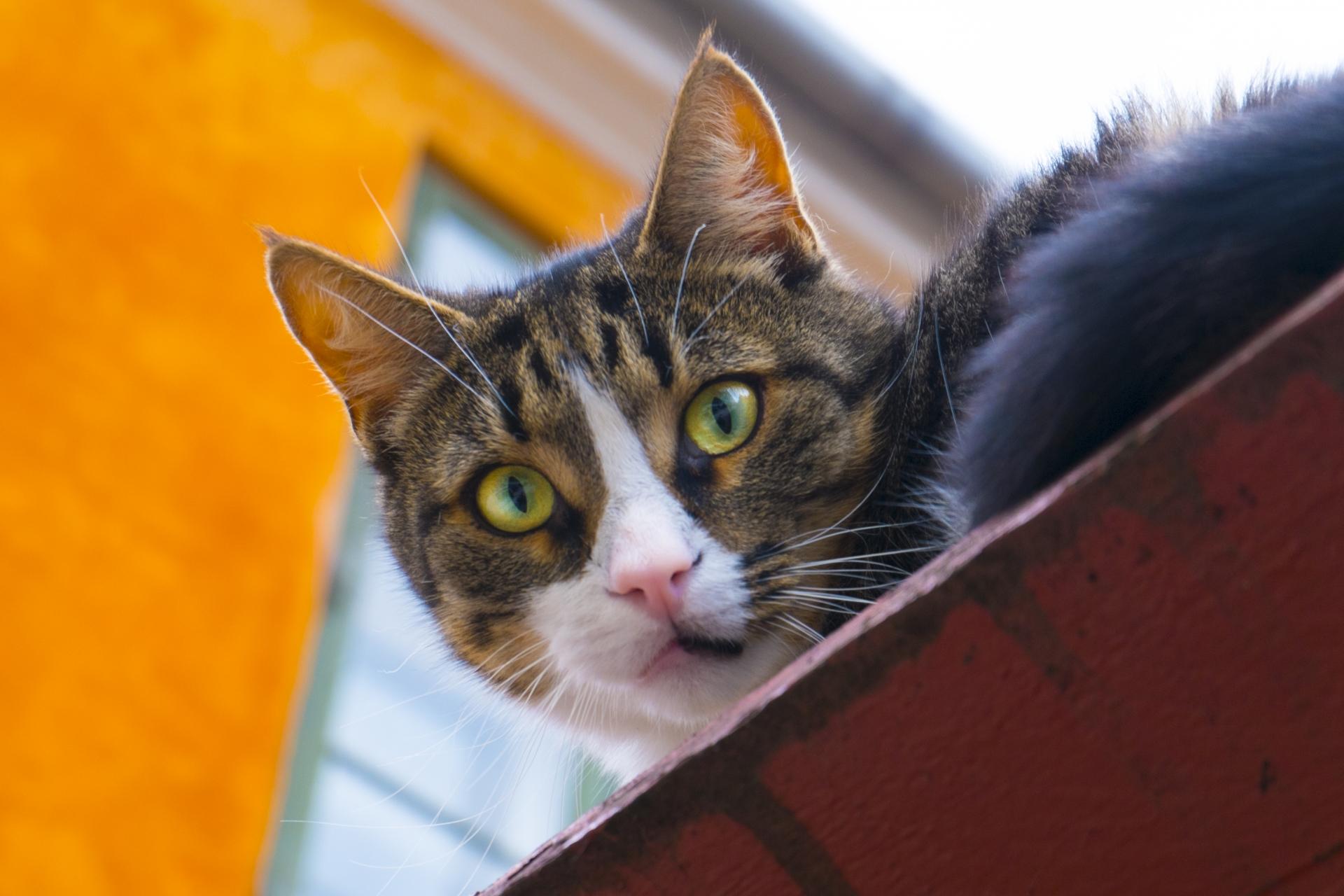 新型コロナウイルスの影響で保護猫がゼロに!?