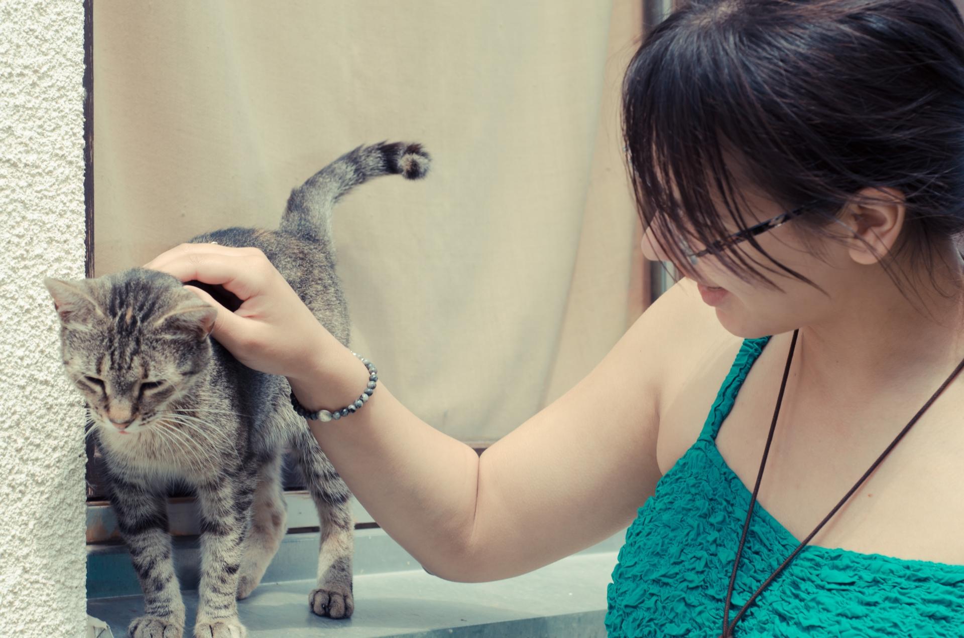 コロナショックで日本の保護猫たちはどうなる?