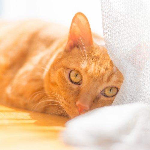 #うちで過ごそう、猫と日光浴をしよう!【猫の日光浴の必要性と効果】