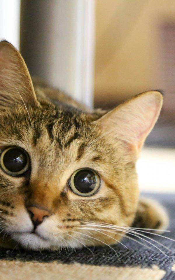 新型コロナの外出自粛で猫を飼う人が増えている?【飼うなら保護猫の里親になろう】