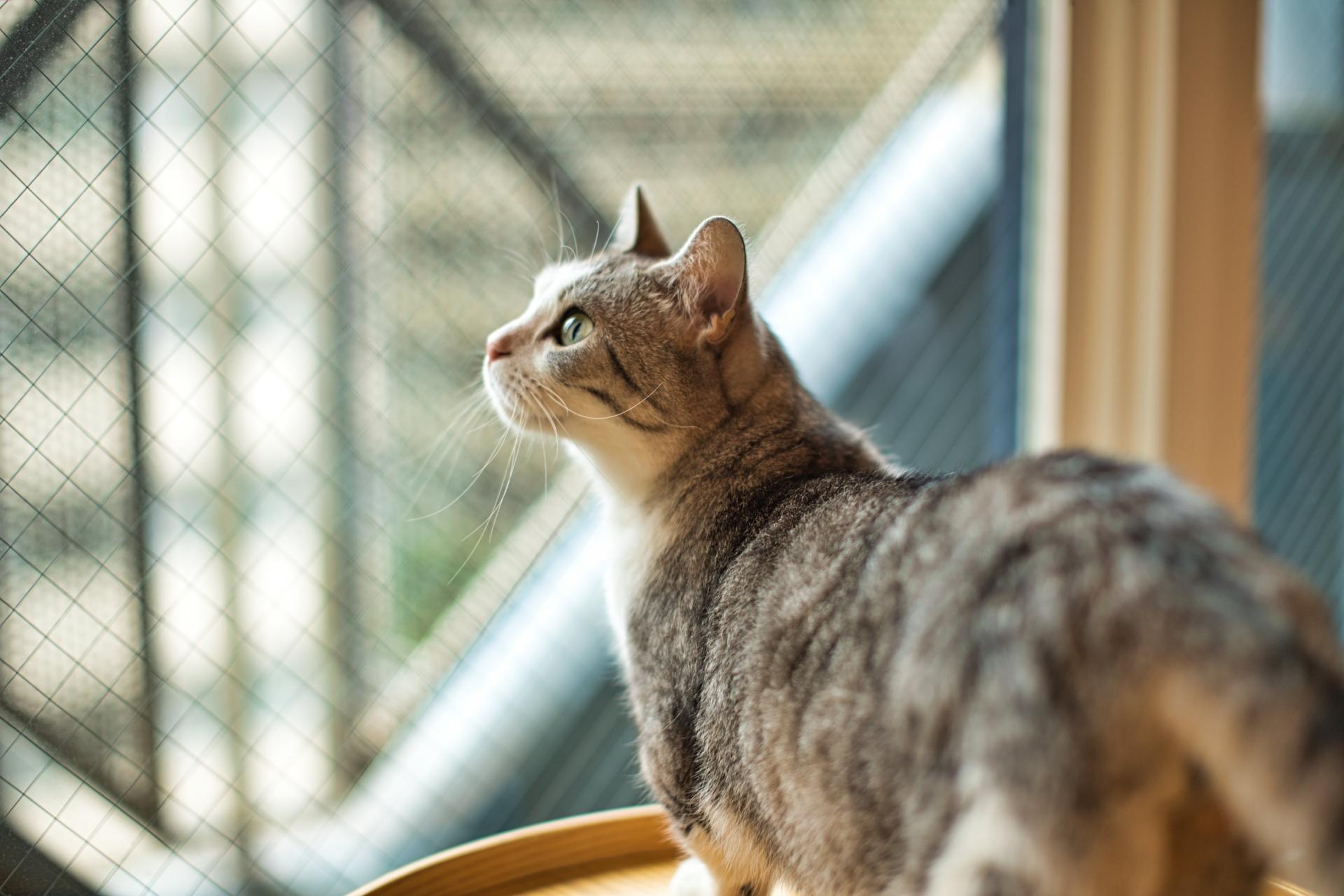 猫が日光浴をする効果