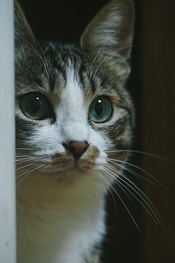 もしも猫の飼い主が新型コロナに感染し入院してしまったら【飼い主の入院時に備える】
