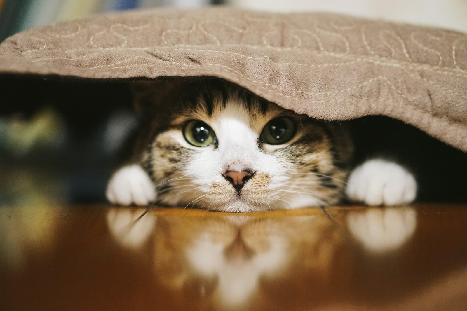 気をつけたい猫の家庭内事故7:飼い主が踏んでしまう