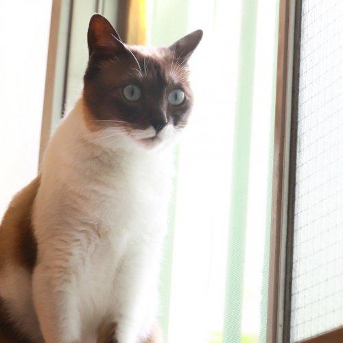猫リテラシーが低い飼い主がやっている5つの行動【飼い主失格?】