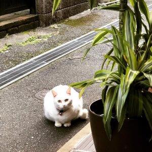 ▲時には近所をパトロールしている猫たちが来店?することも。