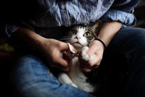 1.猫を抱きかかえて爪を出す