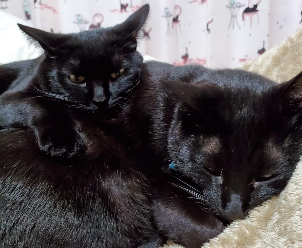 猫は家族、愛おしい存在