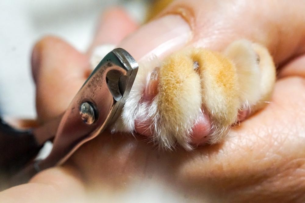 おすすめの猫用爪切り
