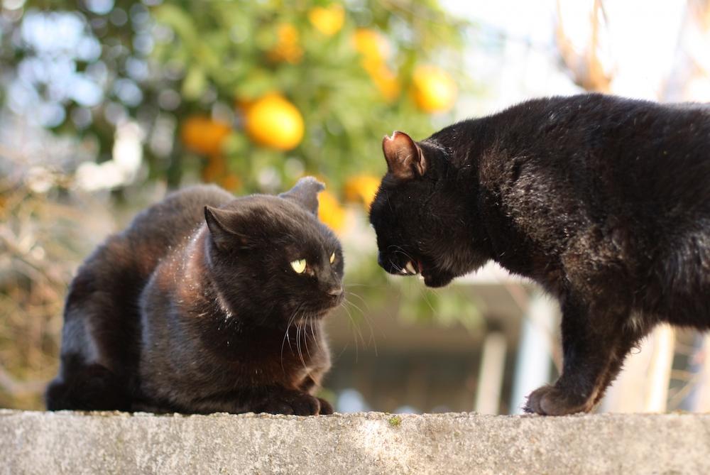 猫はおしゃべり