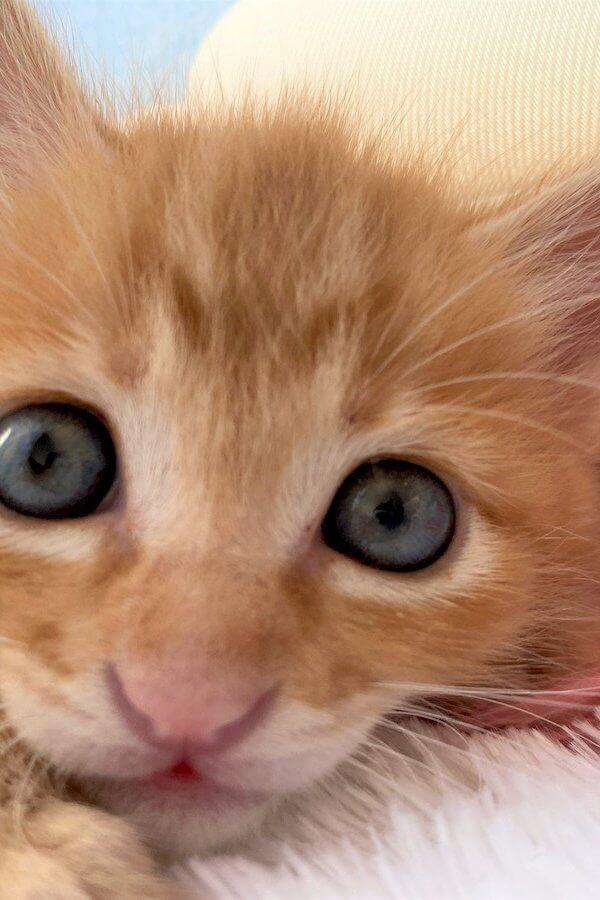 「飼うなら買わないで」幸運のカギしっぽを持つ猫を世界一幸せなにゃんこに【猫の里親体験談/神奈川】