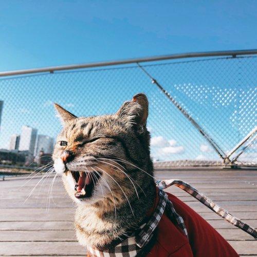 地域猫に助けを求められて保護、お互いを支えあえるパートナーに【猫の里親体験談/神奈川】