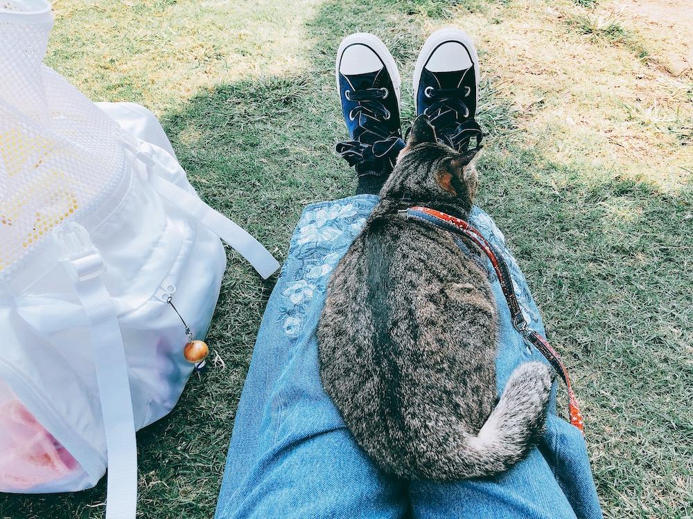猫と支えあえる存在に