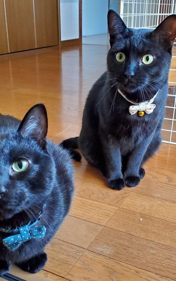 腹が立つこともあるけど愛おしい、甘えん坊の家族【猫の里親体験談/兵庫】