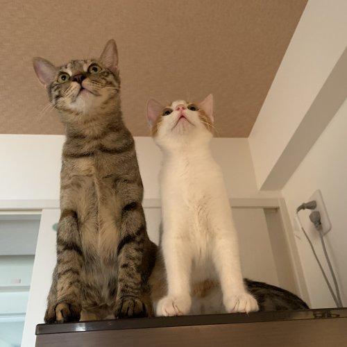 「幸せの猫団子」保護猫3匹と始めた猫ファーストな暮らし【猫の里親体験談/沖縄】