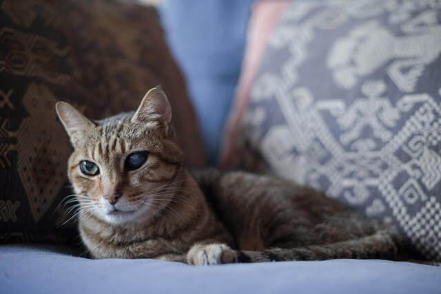 猫を飼うなら保護猫を