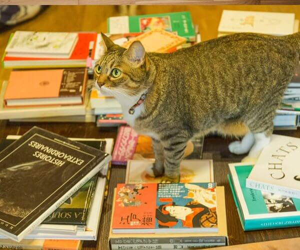 福岡の猫本専門書店に聞いた猫との向き合い方とは【書肆・吾輩堂店主の猫愛】
