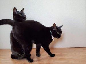 ▲仲良しな黒猫兄弟