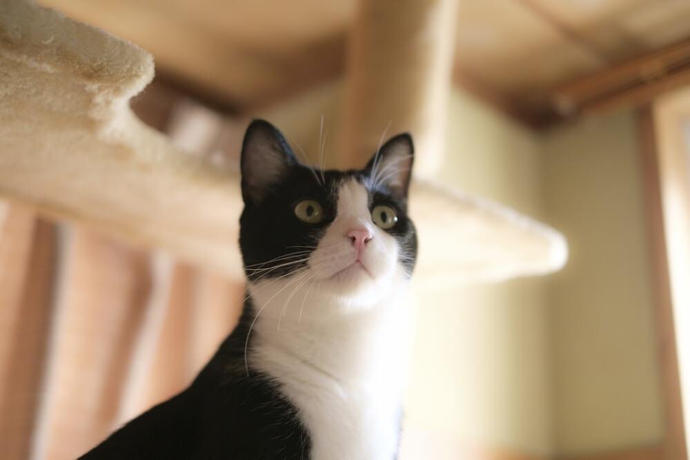 猫の爪とぎの理由と対策の極意とは【猫は褒めて伸びるタイプです】