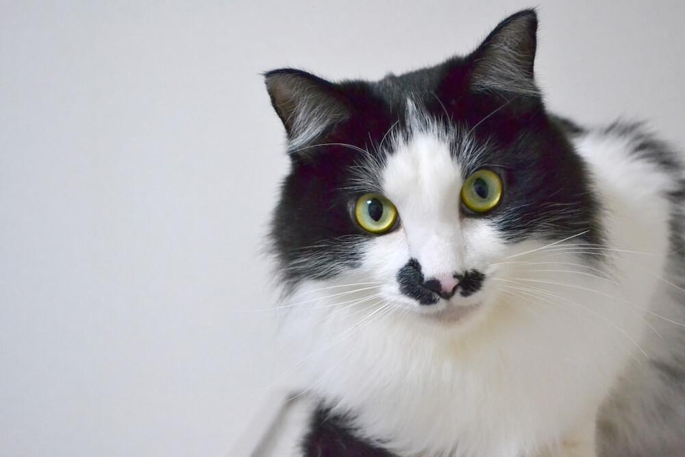 保護猫のトライアル期間中にしておくべきこと【無理なら断念することも大切】