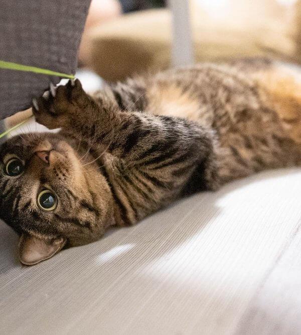 猫も巻き爪になるの?巻き爪や肥厚した爪の対処法と予防法とは