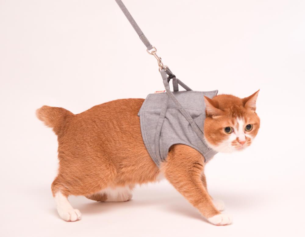 猫用ハーネスは災害時にこそ必要