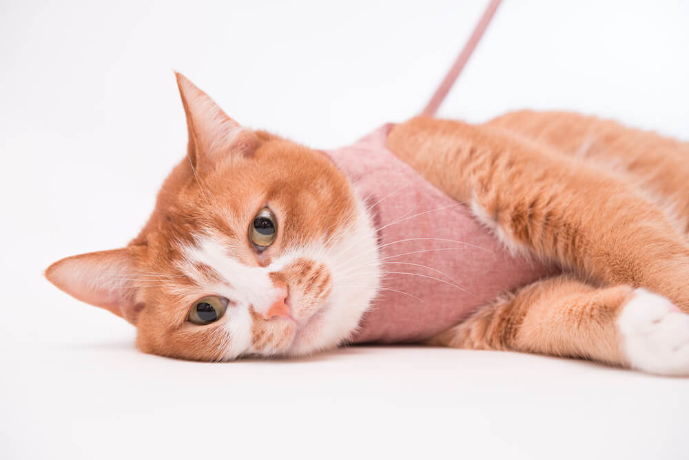 猫の室内飼いはストレスがたまる?