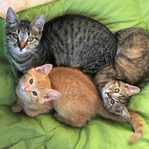 「みんな私を選んで来てくれた」次々と猫がやってきて5匹の保護猫と家族に【猫の里親体験談/山梨】