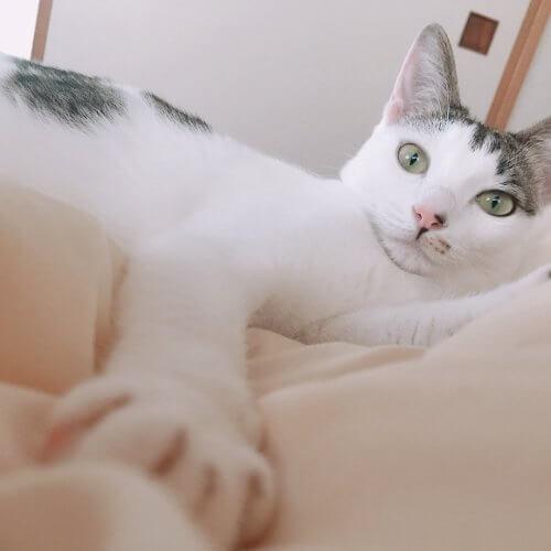 保護猫カフェで出会った元野良のツンデレちゃん、家族に迎えると超甘えん坊に【猫の里親体験談/神奈川】