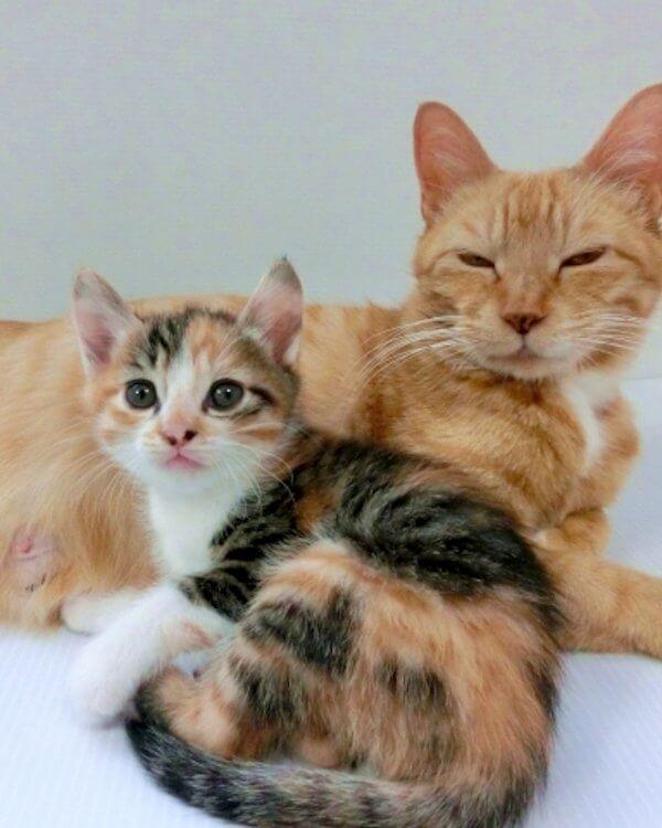 【保護猫を迎える】先住猫がいる場合に気を付けること