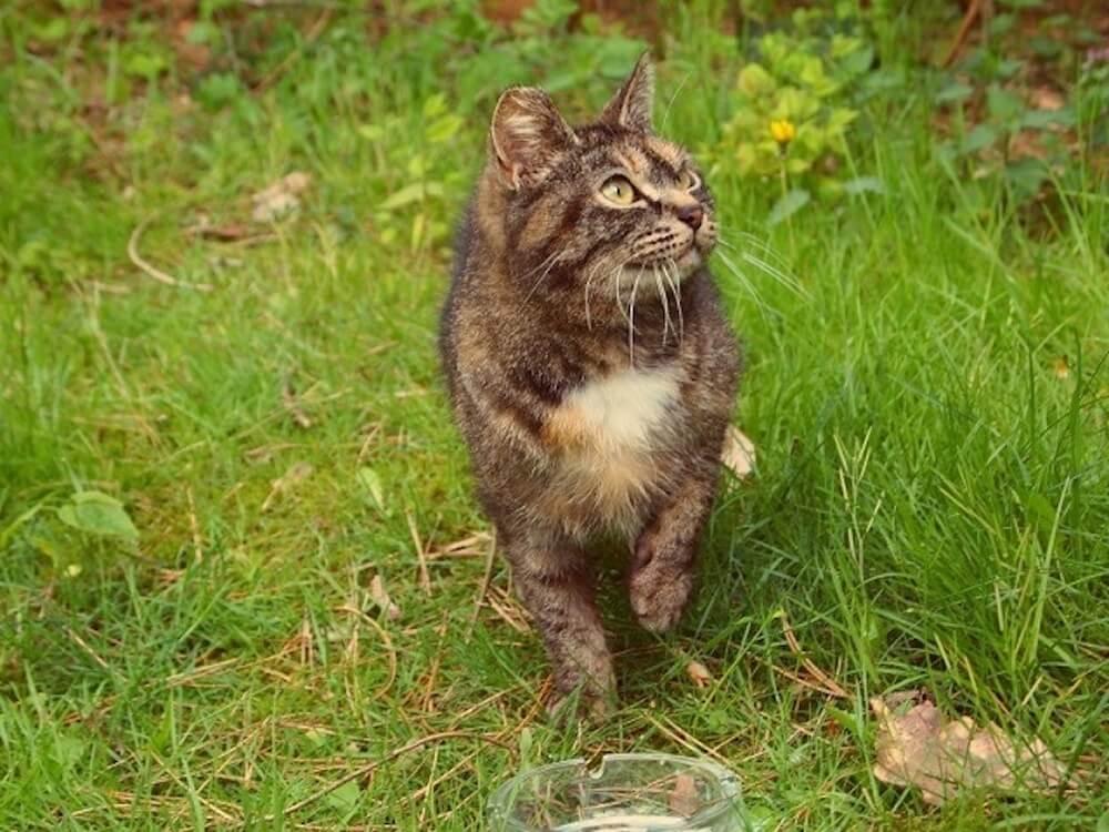 猫は縄張り意識の強い、群れない動物