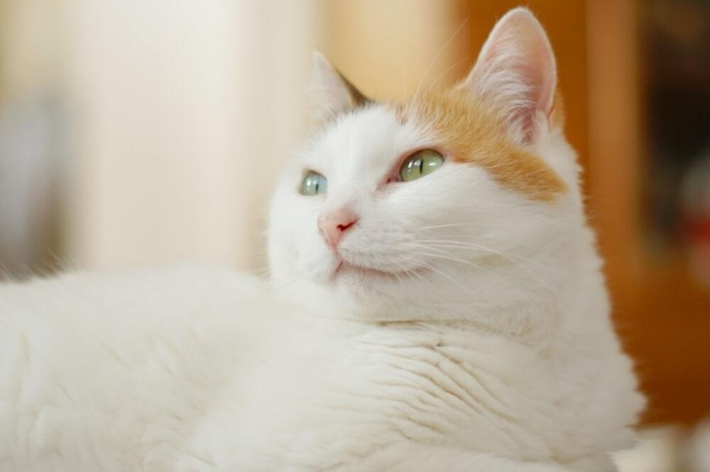 先住猫と保護猫の隔離期間を設けよう