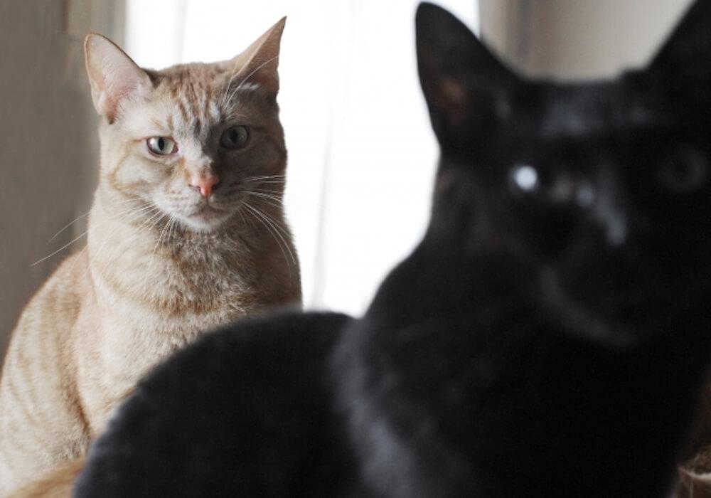 先住猫と新入り猫の対面方法