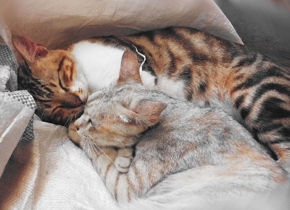 先住猫と新入り猫、どちらも幸せに暮らせるように