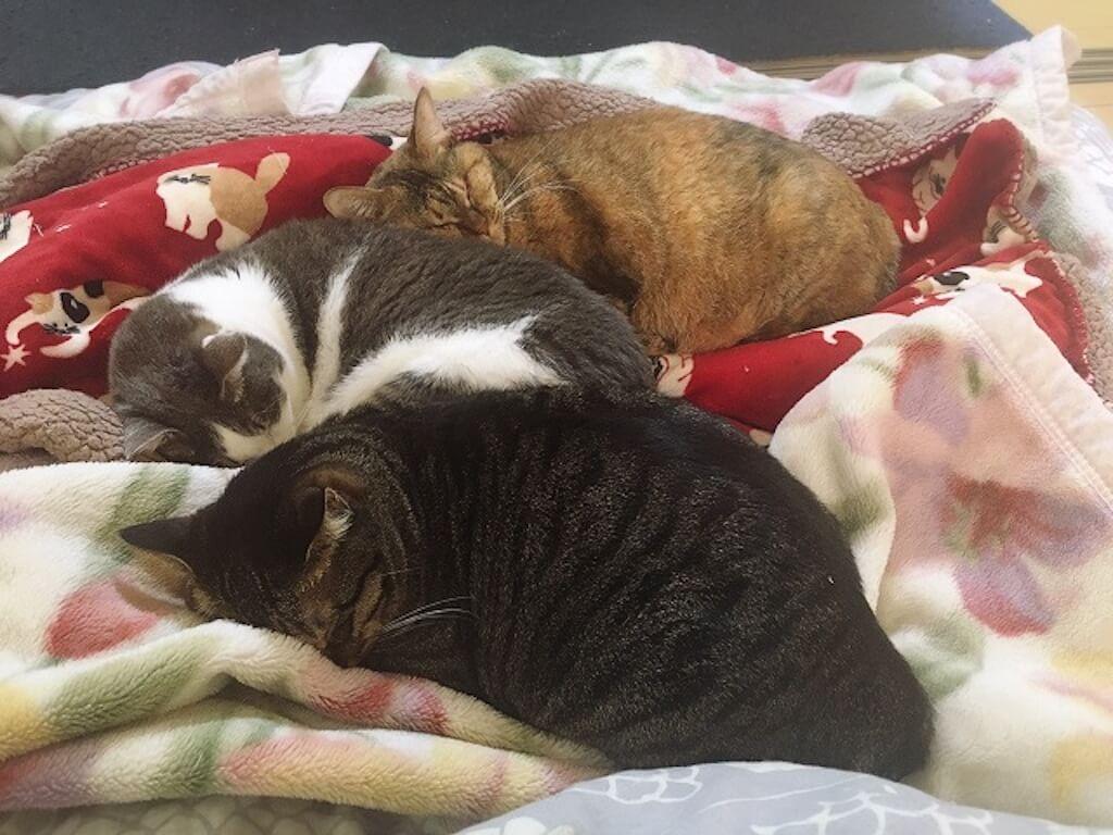 ハンディキャップのある猫を家族の選択肢に