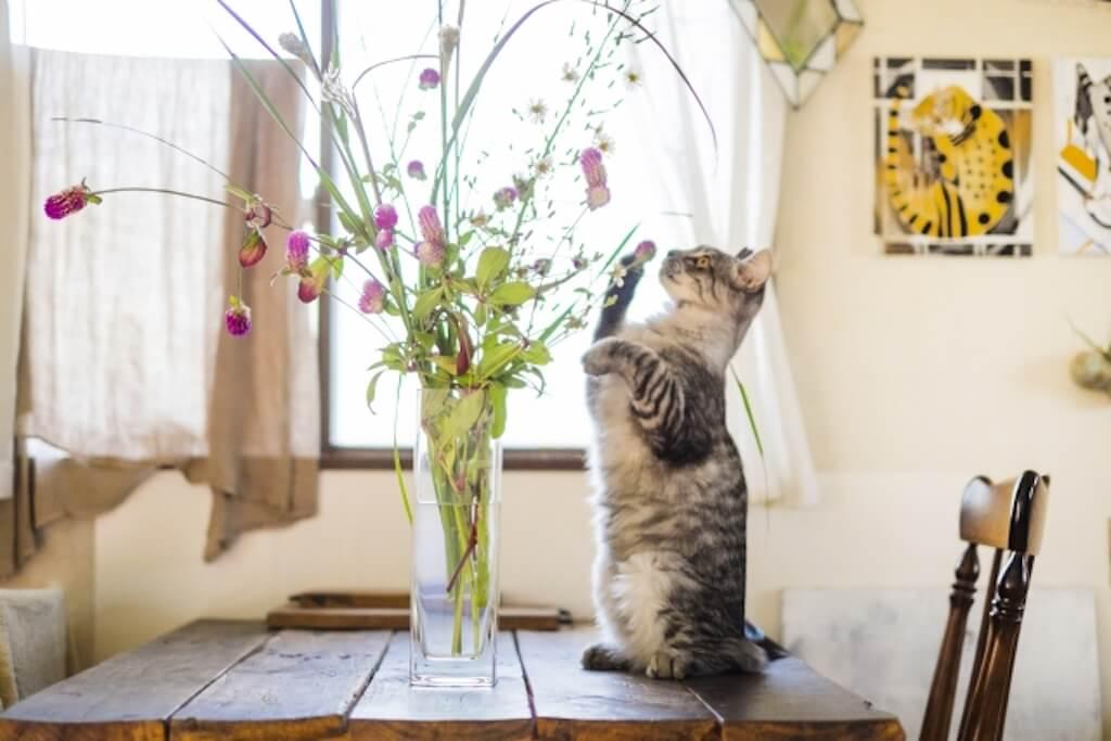 観葉植物や切り花(生花)を選ぶ際は慎重に